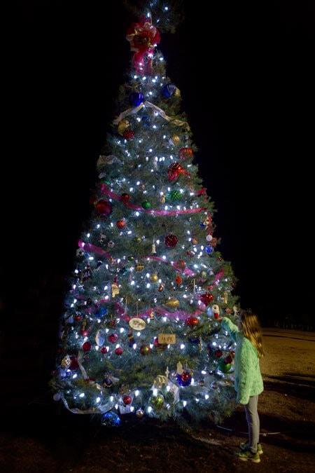 MLF_Tree_120515_fo3a4931